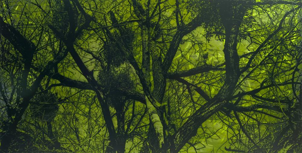 Mittbaum, 2013, 75x150cm, Übermalter Reliefdruck auf Metal